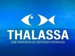 Replay Thalassa