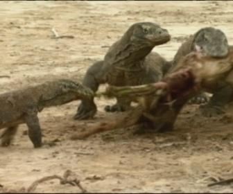 Raw nature : nature sauvage replay