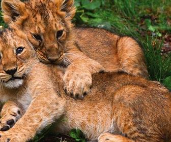 Nous, les bébés animaux replay