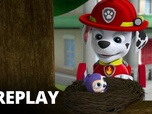 Replay Paw Patrol, la Pat'Patrouille - Les chats secouristes