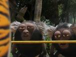 Replay Les as de la jungle à la rescousse - S3 E24 : L'enrhumé des douze singes