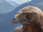 Replay ARTE Regards - Le retour de l'aigle