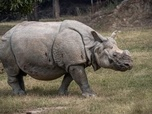 Replay Les animaux du zoo - S2 : Quand les cattas attaquent et adorables rhinos