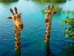 Replay Les As de la Jungle - à la rescousse! - S3 E29 : Tigres et grognons